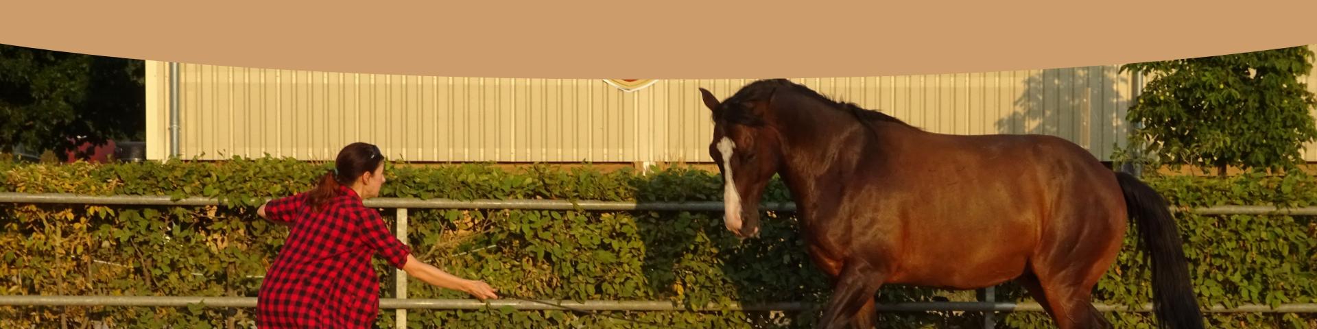 Stark mit Pferden